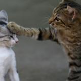 『猫探偵の事件簿』ネタバレあらすじと感想|愛する猫ちゃんとの実話を元にしたハートフルストーリー