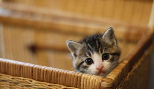 『きょうの猫村さん』2話のネタバレあらすじと感想|猫村さんの想いの深さに泣いてしまいました