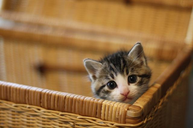 『きょうの猫村さん』ネタバレあらすじと感想