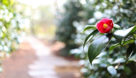 『私たちはどうかしている』3話あらすじと感想 │裏切り者はアイツ!七桜に心を開いていく椿の表情がヤバい