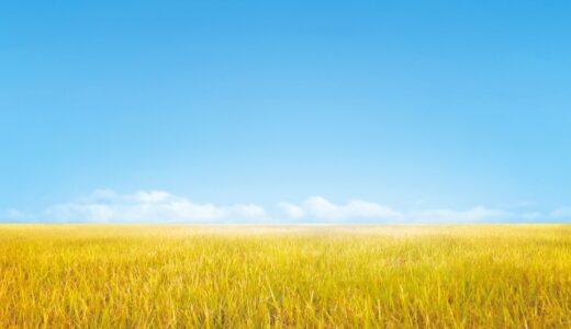 秋田発地域ドラマ『金色の海』ネタバレと感想│風に揺れる稲穂のように、ここにいていいんだよ