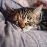 『おじさまと猫』8話ネタバレと感想│はい、モフモフ!おめでとう!猫バカ誕生日=^_^=
